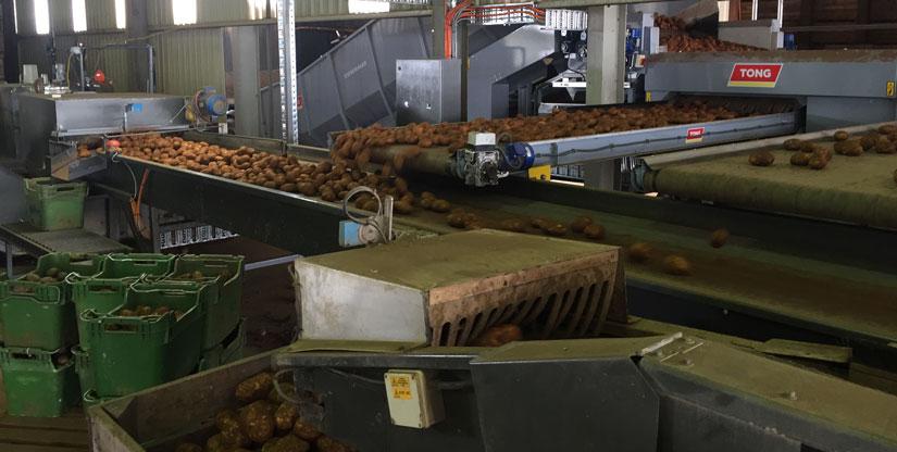 Bulk unloading and sizing machine